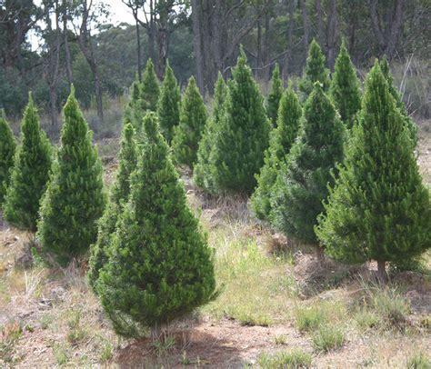 home www christmastreekeng com au
