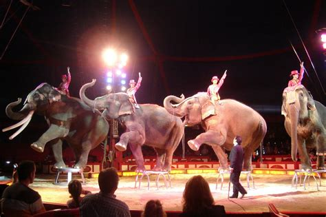 the circus that time i joined the circus by j j howard review