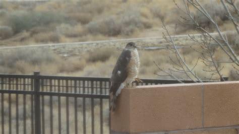 Bird Feeders Albuquerque Backyard Bird Feeding In Albuquerque Rancho Move