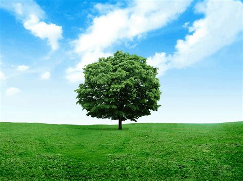 wallpaper free tree wallpapers lonely tree photography wallpapers