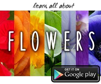 conoscere i fiori conoscere i fiori forum di giardinaggio it