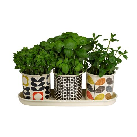 kitchen herb pots orla kiely set of 3 herb plant pots kitchen gifts