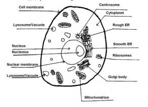 plant and animal cell pictures with labels in cell