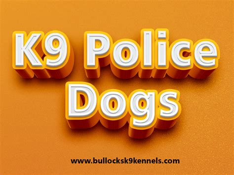 puppies for sale near me craigslist puppies for sale near me craigslist bed bug removal service