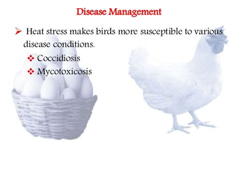 Am I Susceptible To Infection During A Detox Of Percocet by Combating Heat Stress Of Poultry By Dietary Manipulation
