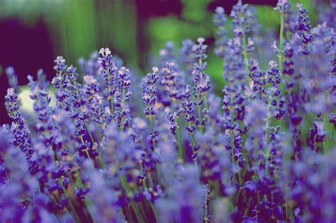 Garten Blumen by Gartenblumen Foto Bild Pflanzen Pilze Flechten