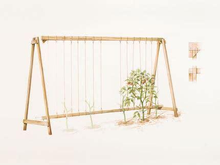 trellis pattern frame tomato trellis a frame family food garden