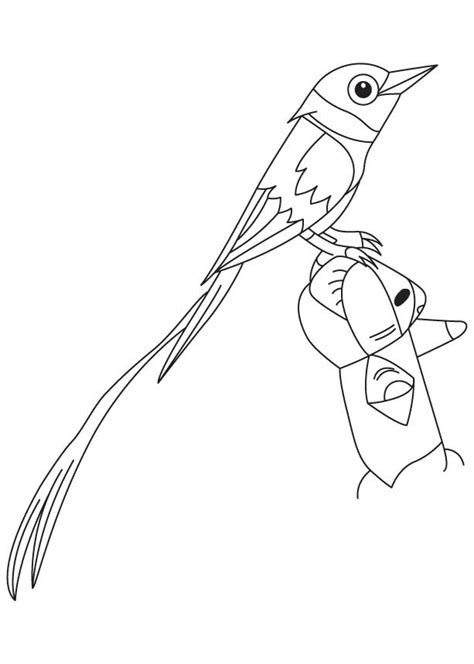 coloring pages bird of paradise bird of paradise coloring pages