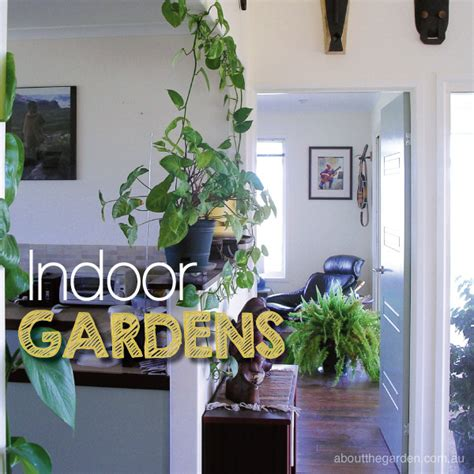 best indoor plants to create an indoor garden sanctuary