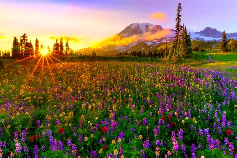 spring meadow hd wallpaper background image