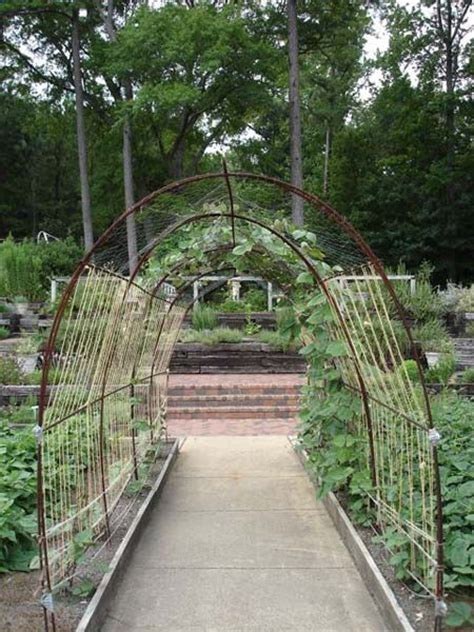 Garden Arch Rebar This Bean Arch Made From Rebar Supports Twine And Chicken