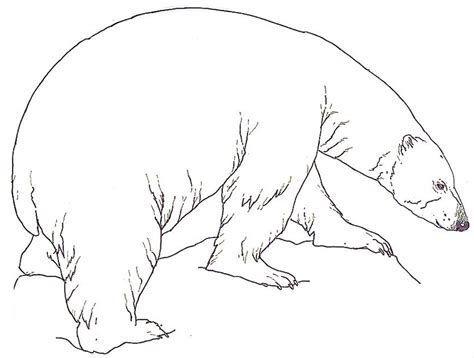 Free Printable Polar Bear Coloring Pages For Kids Polar Color Page