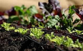 organic gardening advantages the garden glove