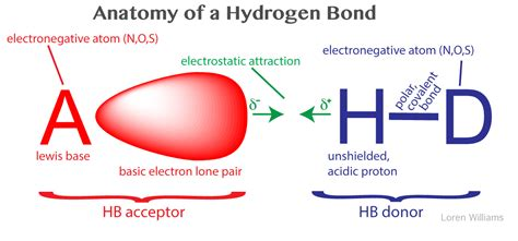proton h acceptor molecular interactions noncovalent interactions