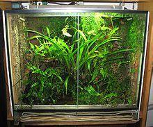 Ewiges Terrarium Bauen by Terrarium Wikip 233 Dia