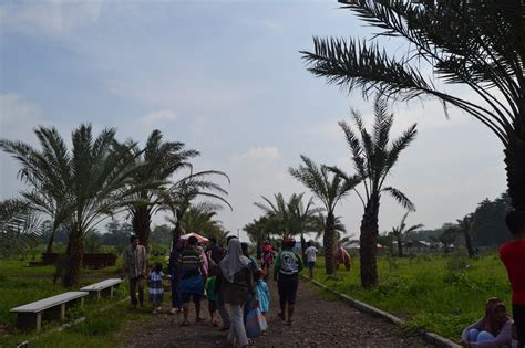 inilah wisata kebun kurma terbesar indonesia
