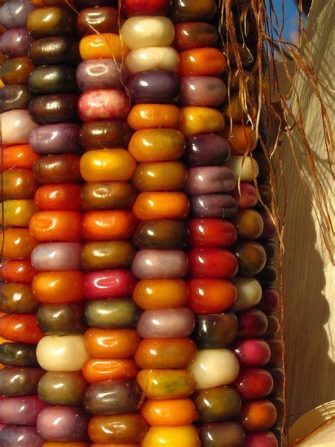 el corn clsicos de b011r4z8o0 olotes de tecintle el alimento de los dioces corn majs