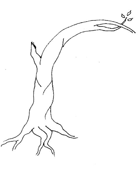 coloring page of a tree branch bare tree coloring page coloring pages pictures imagixs