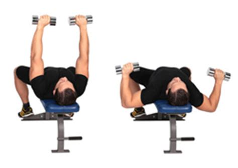 dumbbell chest press vs bench press chest day training dumbbell presses vs bench press for isolation fit n flexed