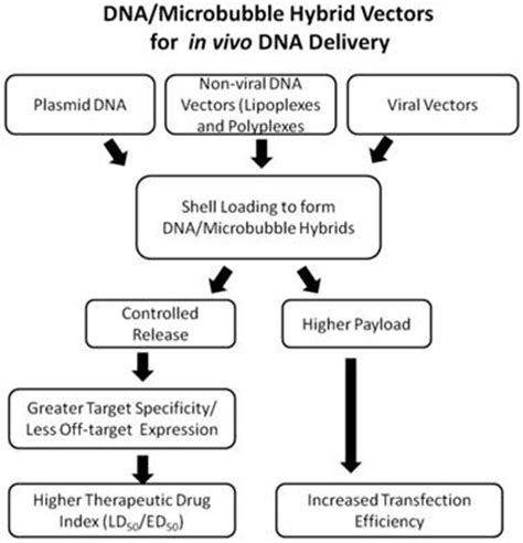 gene therapy flowchart advances in ultrasound mediated gene therapy using