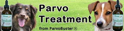 parvo in puppies survival rate parvo treatment parvo in dogs parvo symptoms parvaid