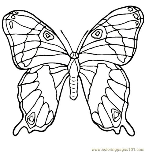Butterfly Coloring Pages Pdf butterfly coloring page 012 coloring page free butterfly
