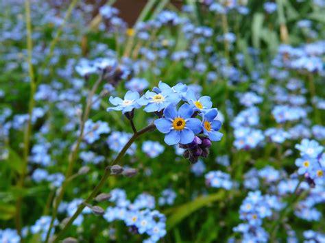 petali fiori foto gratis natura petali fiore flora fiori