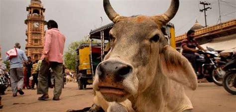 imagenes sagradas varias 191 por qu 233 las vacas son sagradas en la india tophistorias