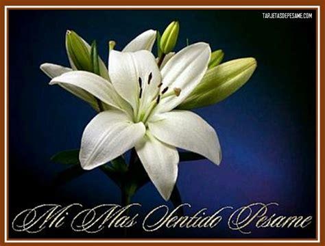 imagenes de flores para un amigo im 225 genes de sentido p 233 same para un amigo que perdi 243 un