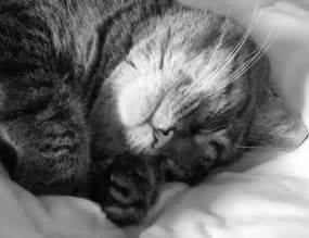 Black And White Black And White File Sleeping Cat In Black And White Jpg Wikimedia Commons