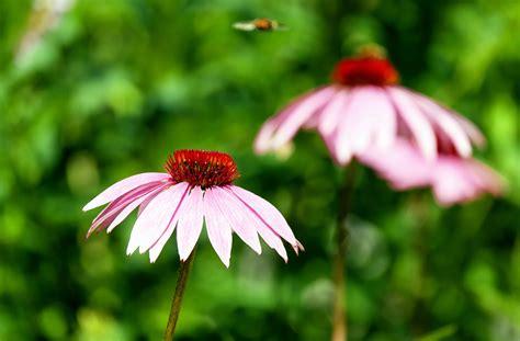 Garten Pflanzen Sommer by Kostenlose Bild Sommer Blume Natur Flora Pflanze