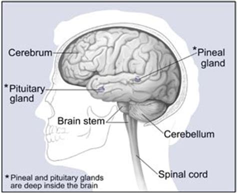can a brain tumor cause mood swings brain tumor causes symptoms treatment brain tumor
