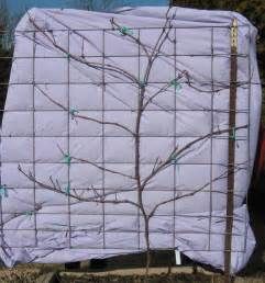 Trellis For Grapevines Part 5 Growing Berries And Grapes In Your Mini Fruit