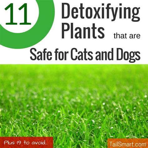 Plantlife Detox by After Reading The Great List Of 30 Plants That Can Detox