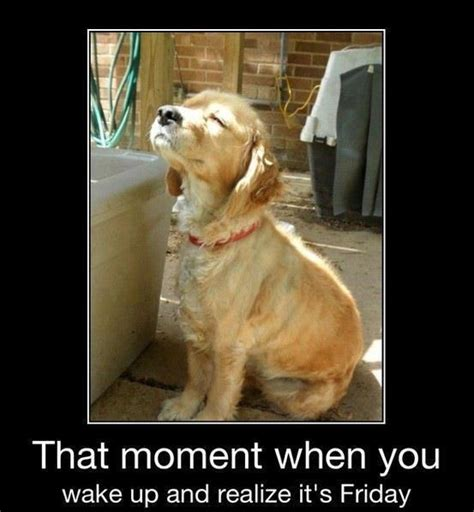 Dog Friday Meme - tgif am i right folks enjoy this smattering of humor on