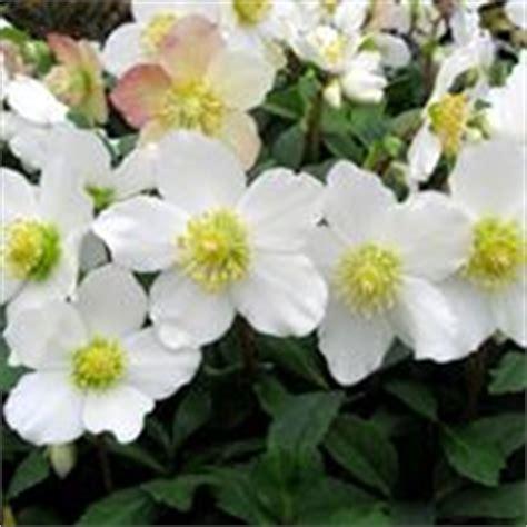 fiori invernali da vaso esterni fiori invernali da balcone piante da giardino fiori
