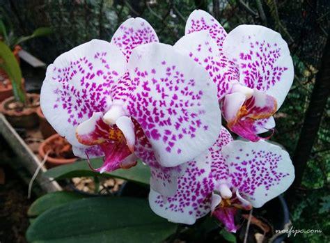 imagenes de las flores mas lindas del mundo imagenes de las 10 orquideas mas hermosas del mundo