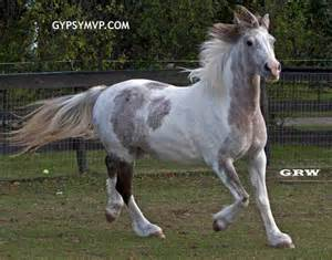 grey paint sles view topic rainy days wild horse accepting chicken smoothie
