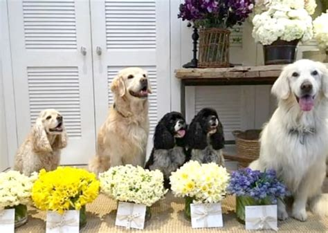 oprah s dogs oprah winfrey s dogs give flowers for every us weekly