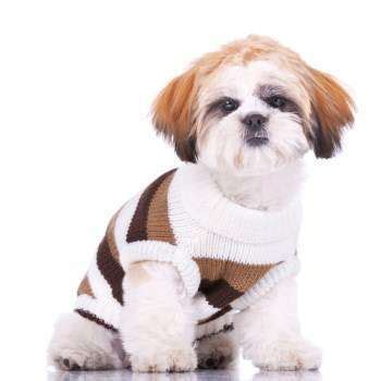 baby shih tzu names shih tzu information center shih tzu names
