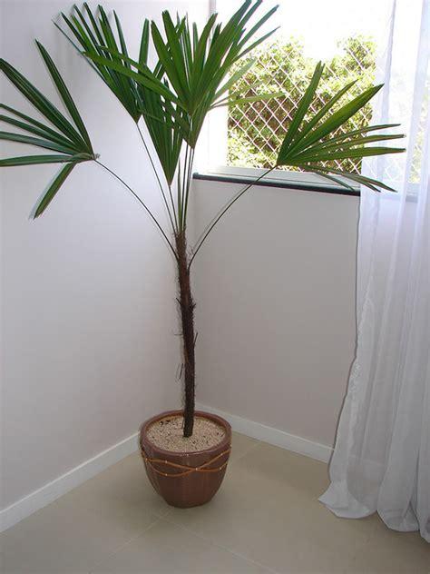 apartamento na planta cinas plantas para cultivar em apartamentos blog jba im 243 veis
