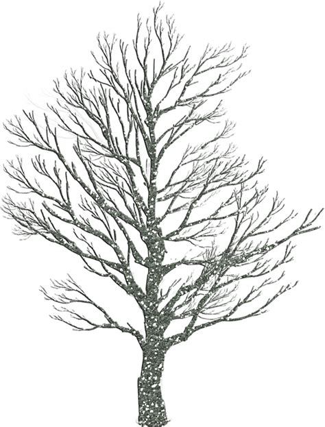 winter tree how to draw winter trees 10 pics how to draw in 1 minute
