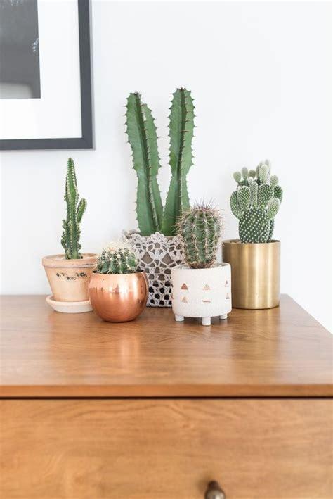 cactus home decor 25 best ideas about cactus decor on pinterest colour