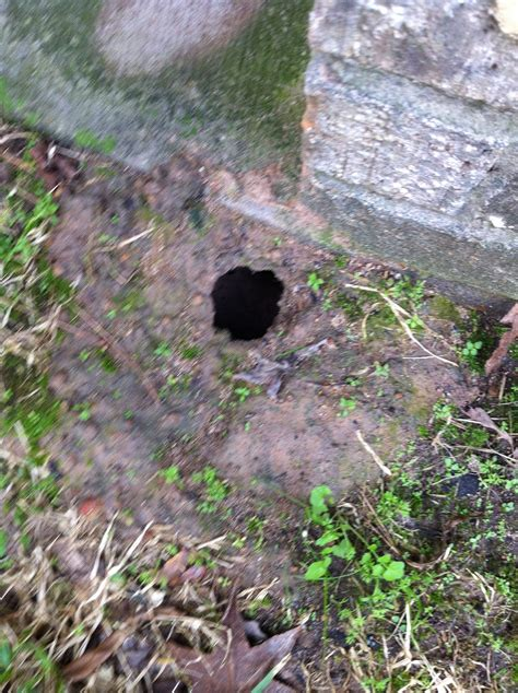 holes in backyard holes in my yard ask an expert