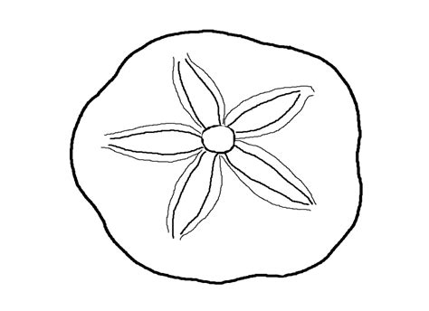 sand dollar coloring pages