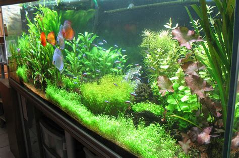 Lu Pl Aquascape aquarium en aquascaping 19 retour de vacances