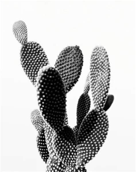 Black And White Cactus Wallpaper