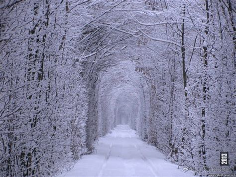 images of love in winter beautiful eastern europe tunnel of love ukraine