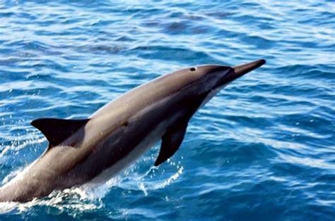 liko kauai boat tours na pali sailing catamaran snorkel tour 5 hour kauai