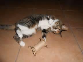 jouets pour chats a soi meme